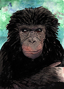 Watercolor of a Chimpanzee.